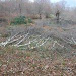 Forestale di Roccadaspide sequestra 150 quintali di legna tagliata abusivamente