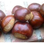 marrone-roccadaspide