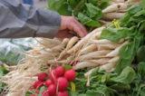 Buying Radish at the farmer's market