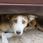 Agropoli, due giornate dedicate alla microchippatura dei cani